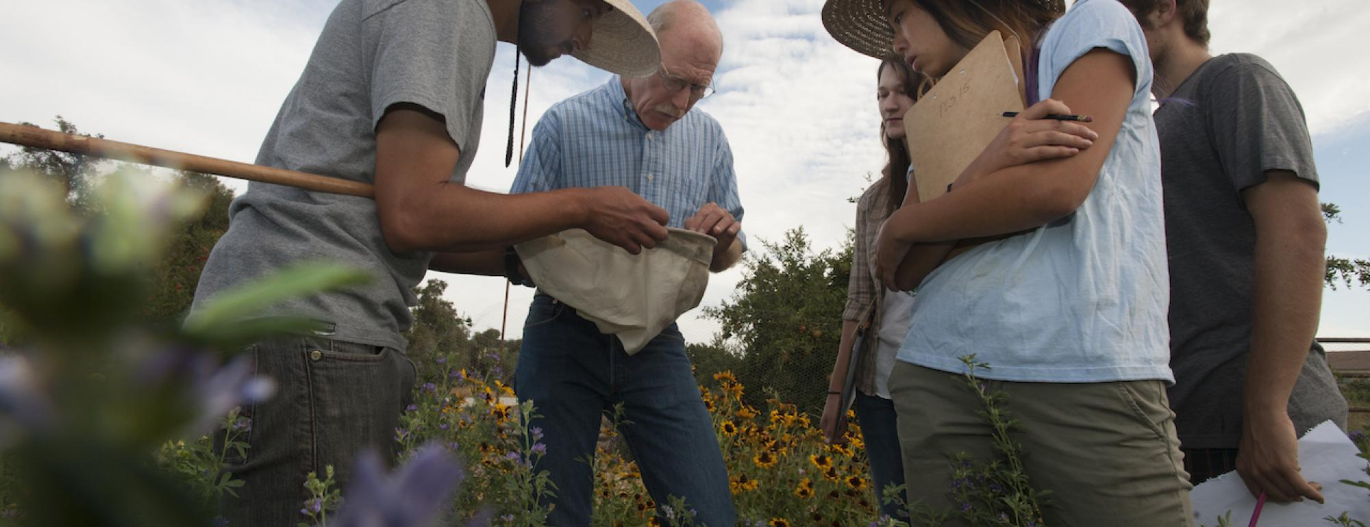 Experiential learning at the UC Davis Student Farm